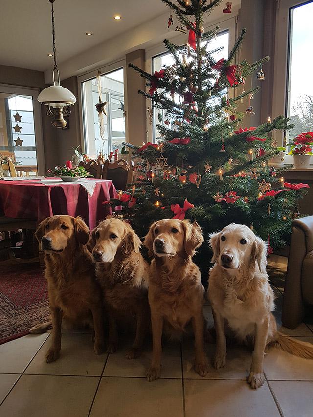 Weihnachten-2018