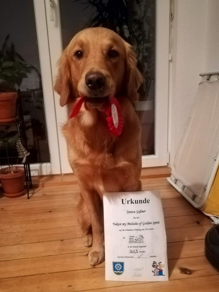 Yukon_Obedience